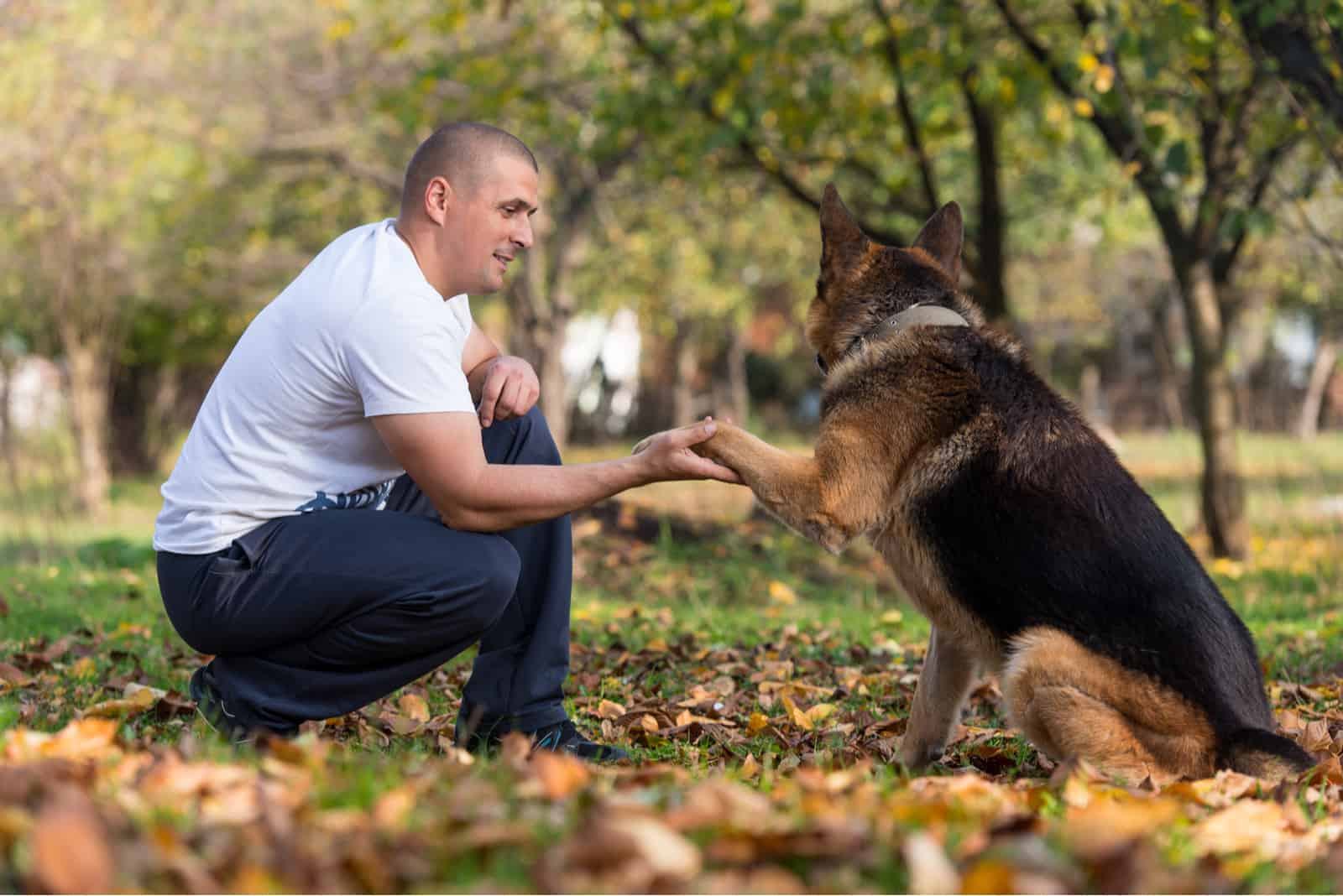 a German Shepherd is playing with the owner