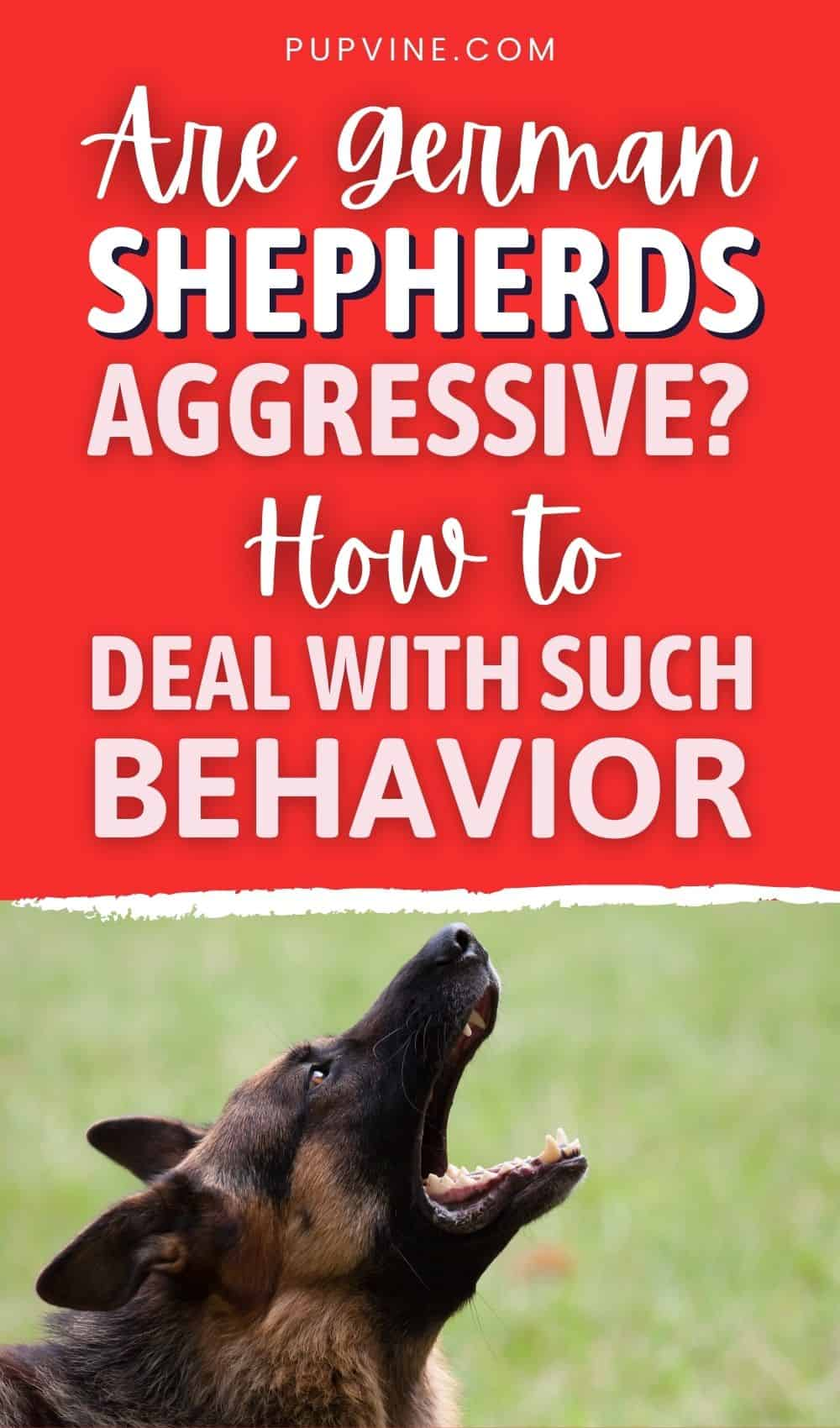 Are German Shepherds Aggressive How to Deal With Such Behavior
