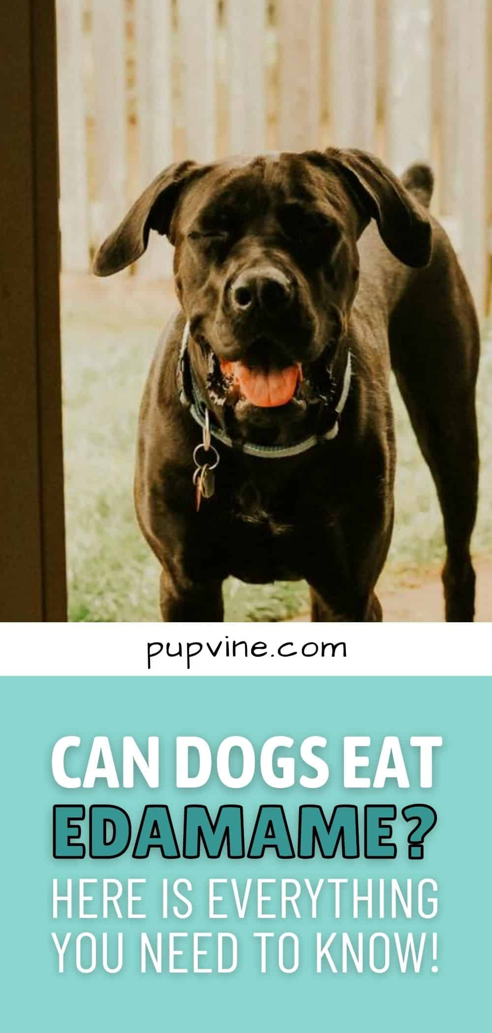 Can Dogs Eat Edamame? Here Is Everything You Need To Know!