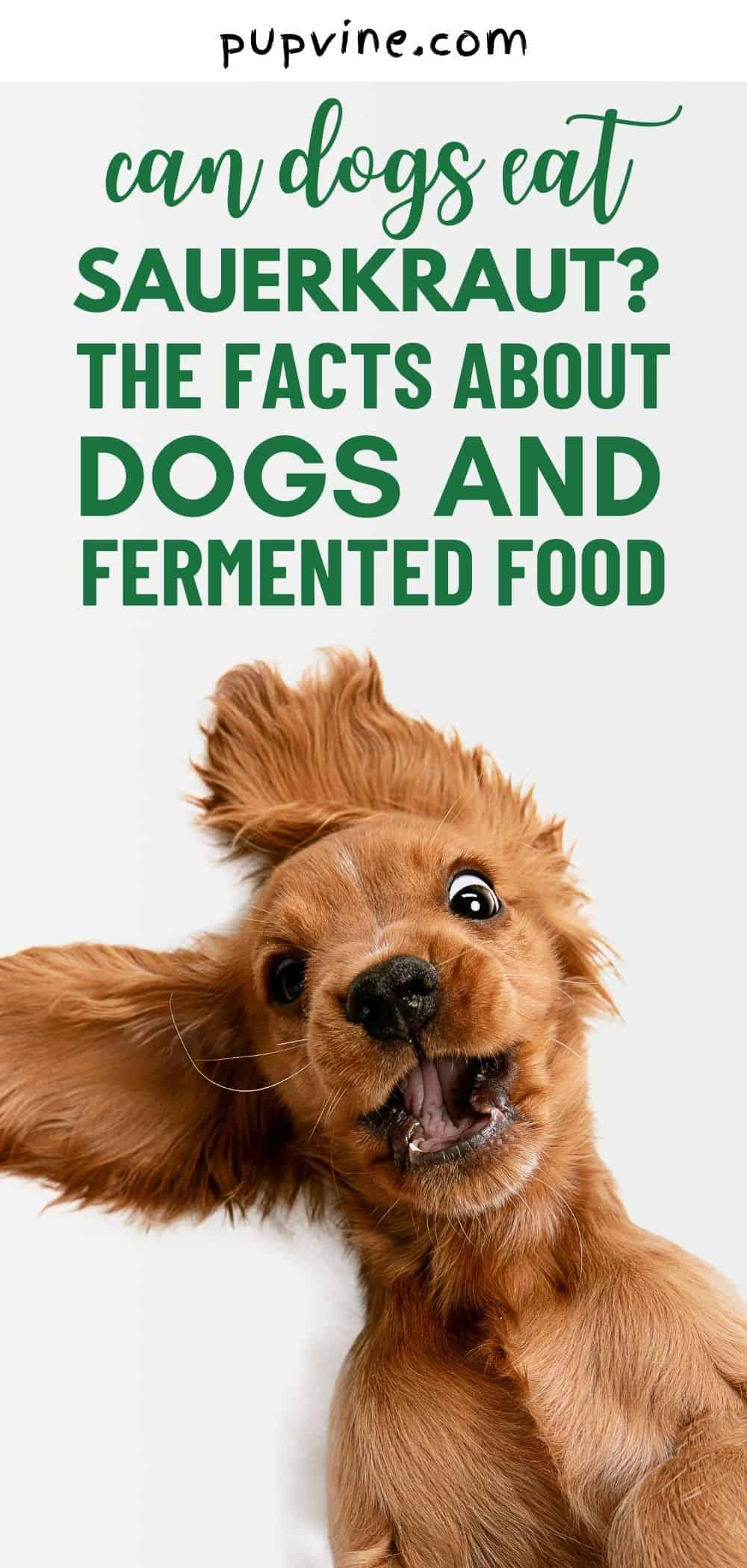 Can Dogs Eat Sauerkraut? The Facts About Dogs And Fermented Food