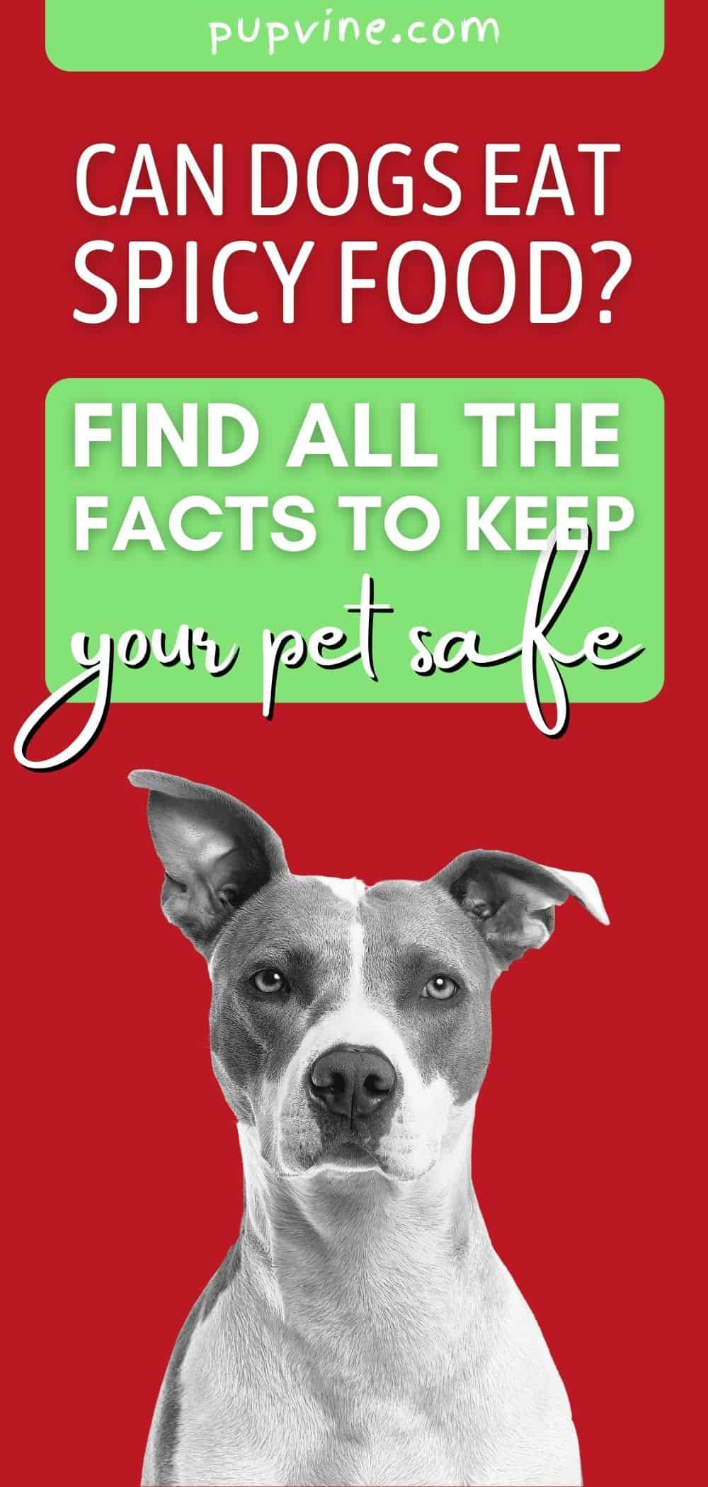 Can Dogs Eat Spicy Food? Find all the facts to keep your pet safe