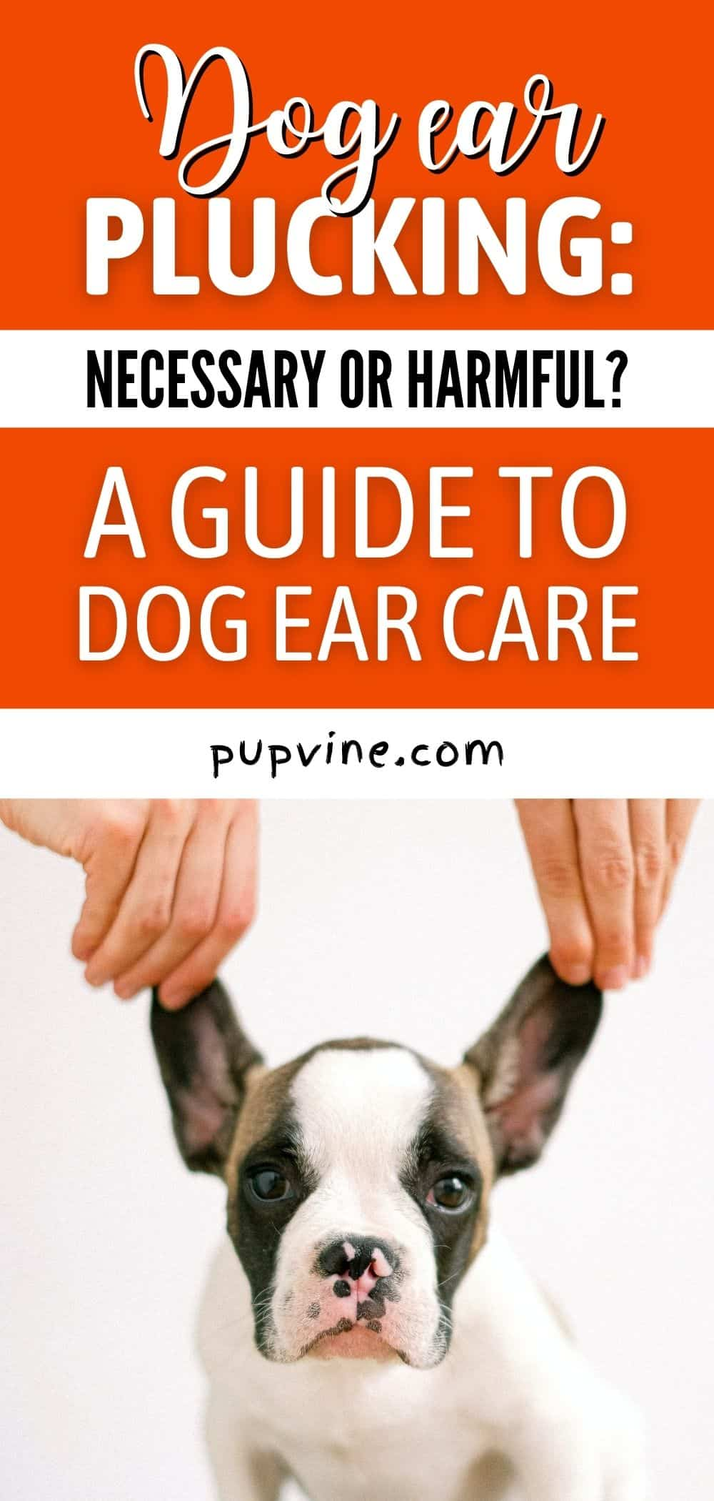 Dog Ear Plucking: Necessary Or Harmful? A Guide To Dog Ear Care