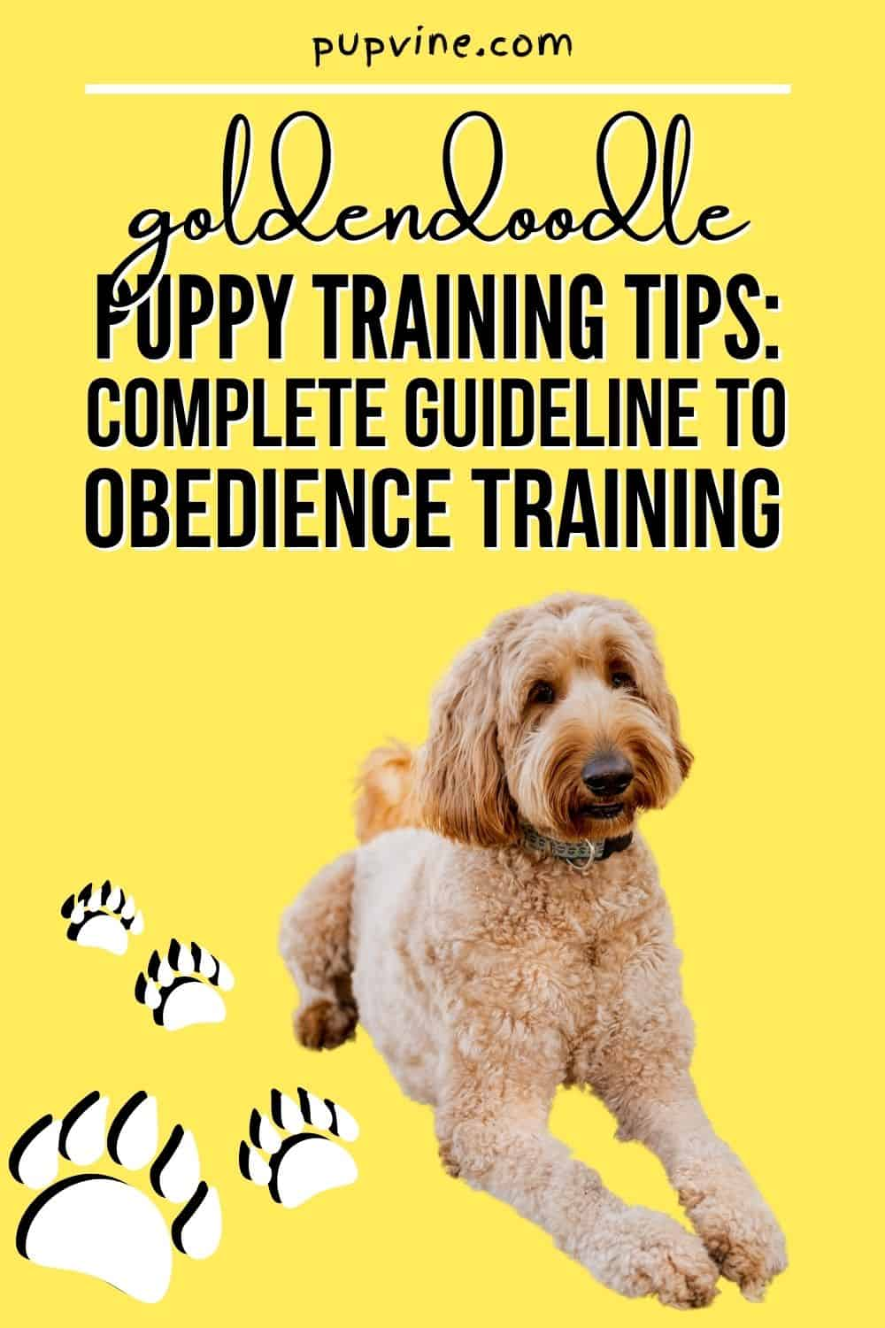 Goldendoodle Puppy Training Tips – Complete Guideline To Obedience Training