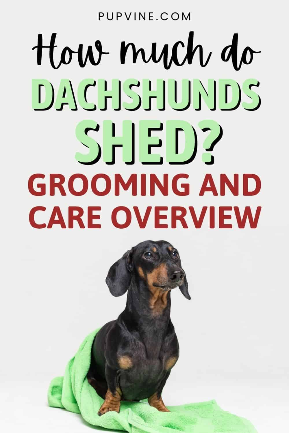 How Much Do Dachshunds Shed? Grooming And Care Overview