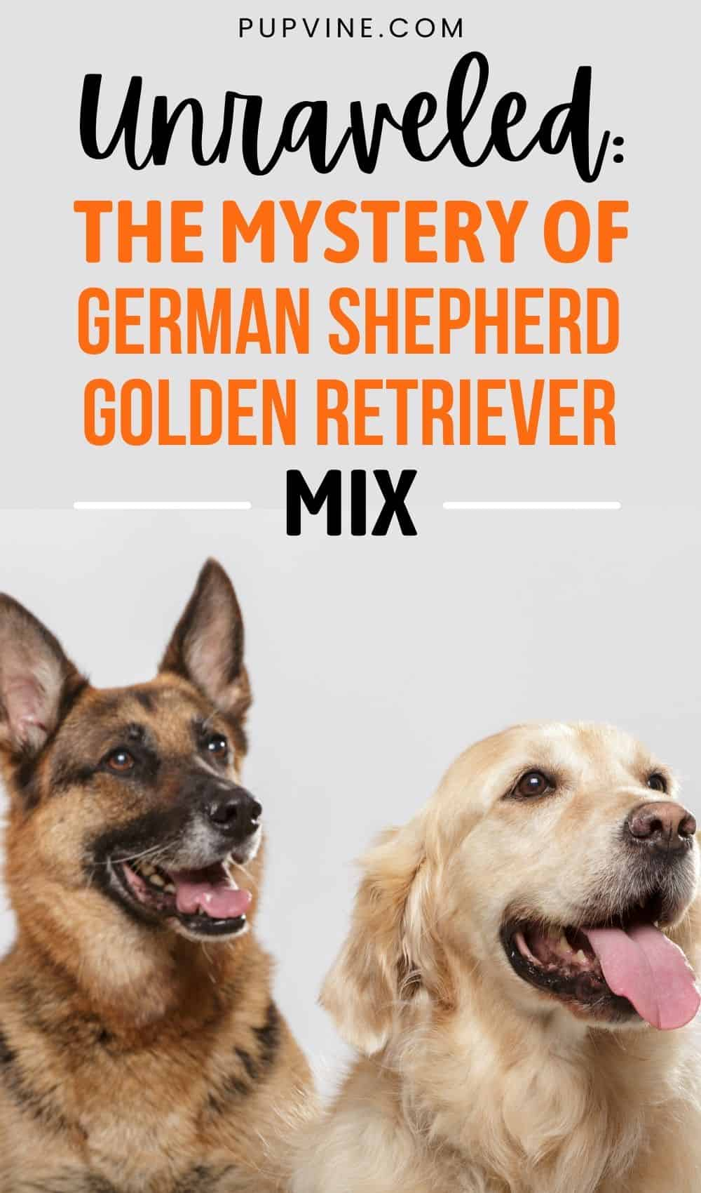 Unraveled: The Mystery Of German Shepherd Golden Retriever Mix