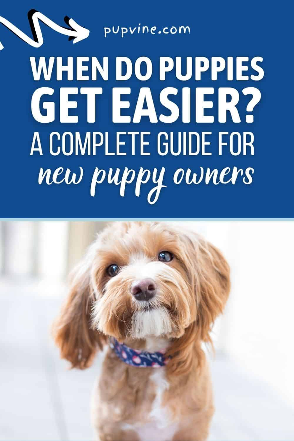 When Do Puppies Get Easier? A Complete Guide For New Puppy Owners