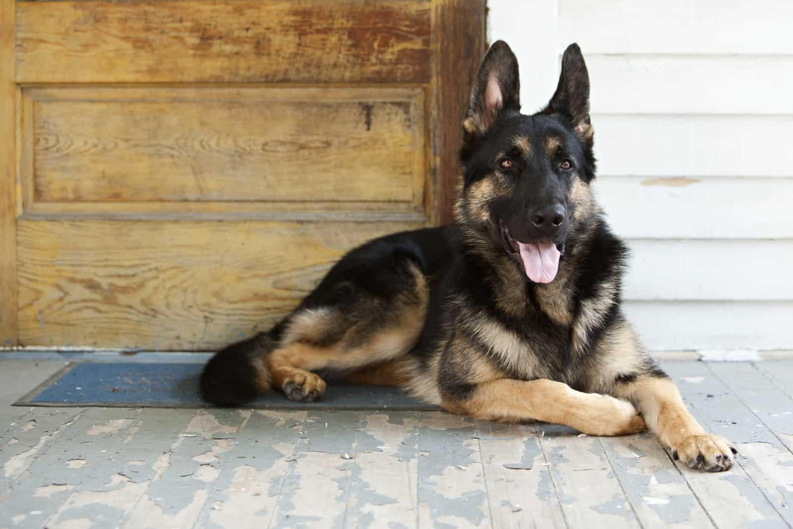 a German Shepherd is sitting by the door