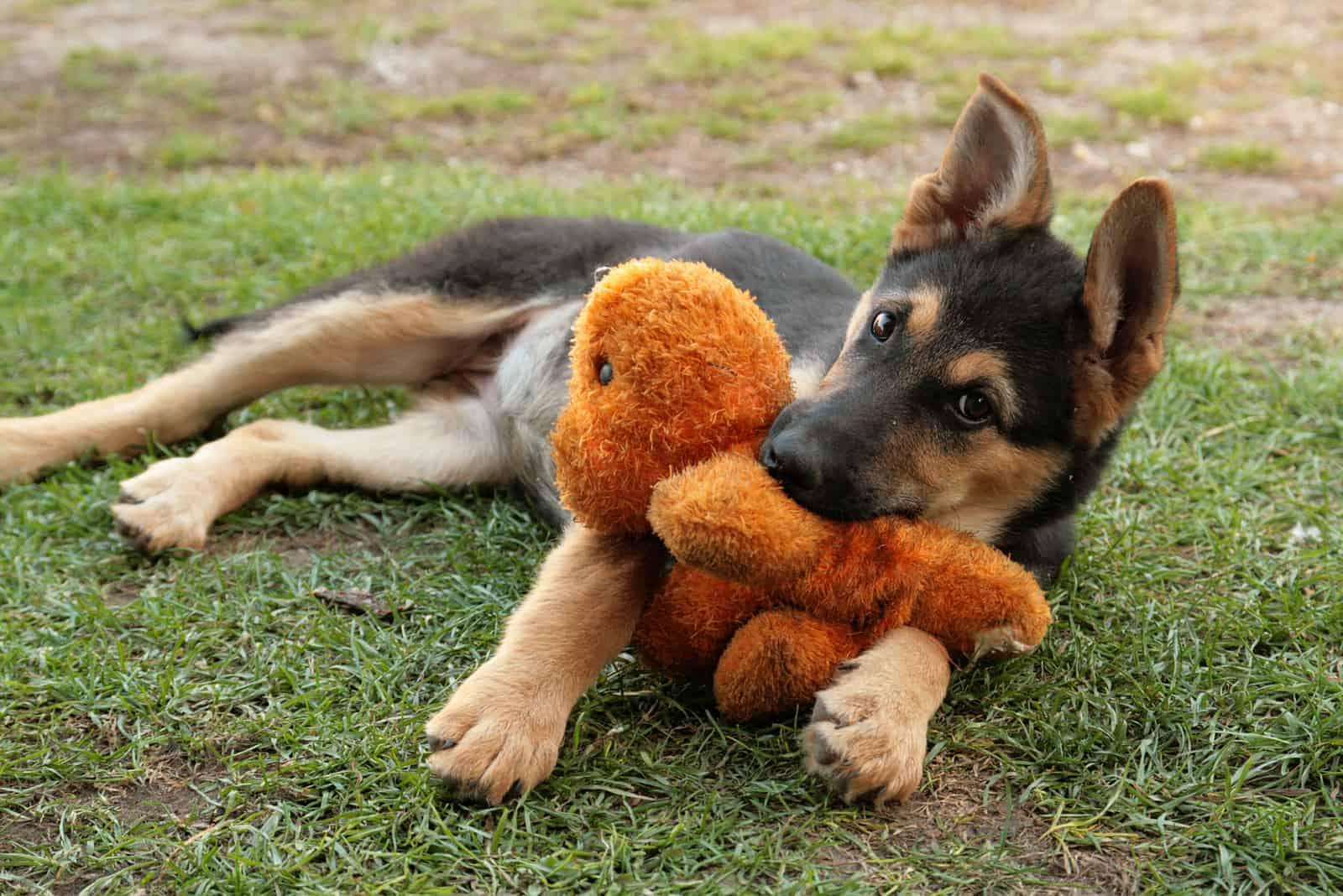 a German Shepherd plush toy