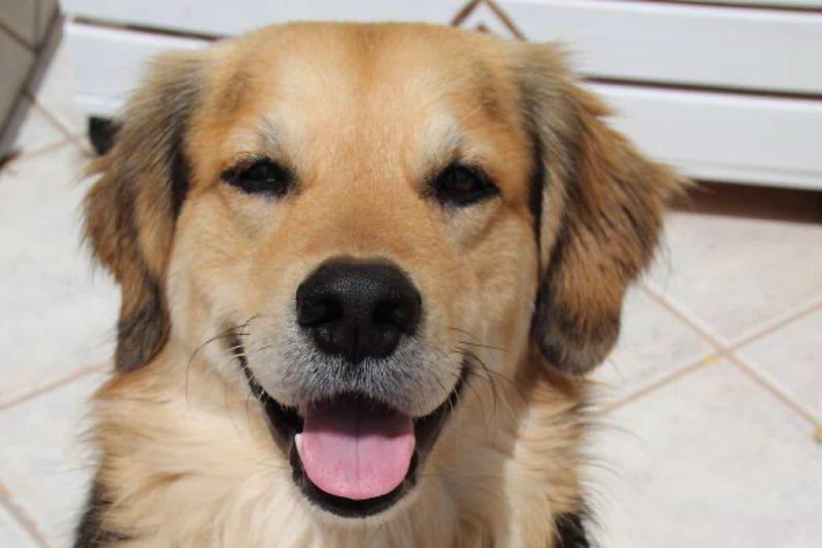 a beautiful colorful crossbreed dog