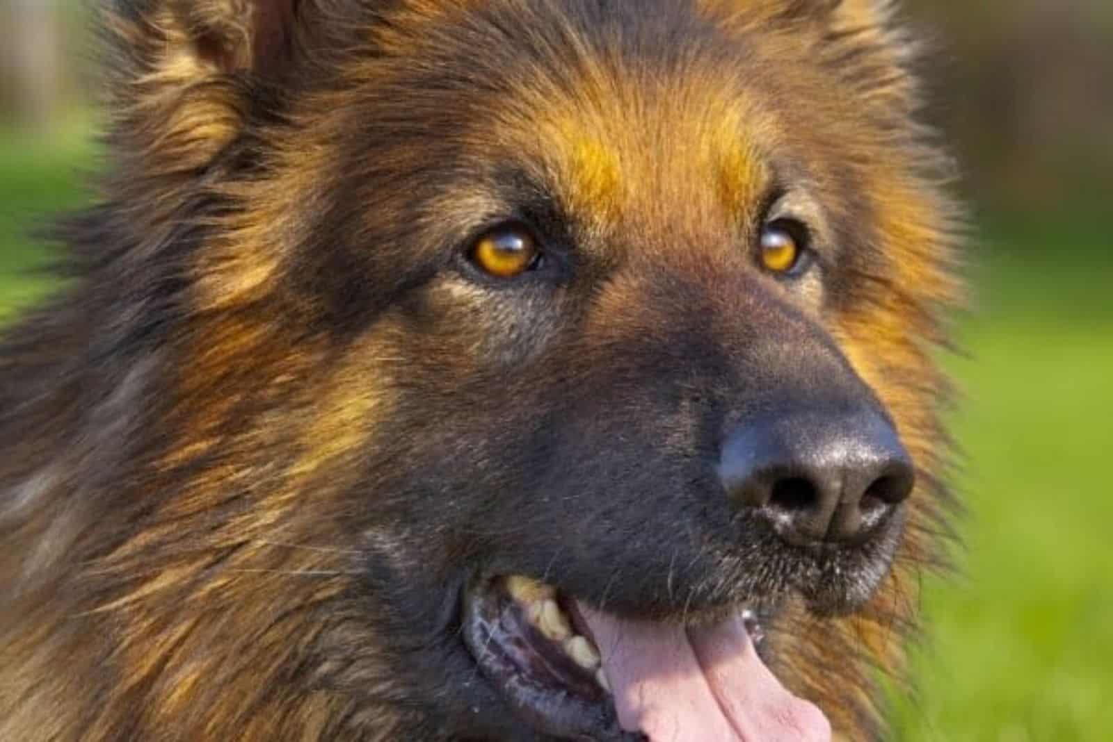 a portrait of a beautiful crossbreed dog