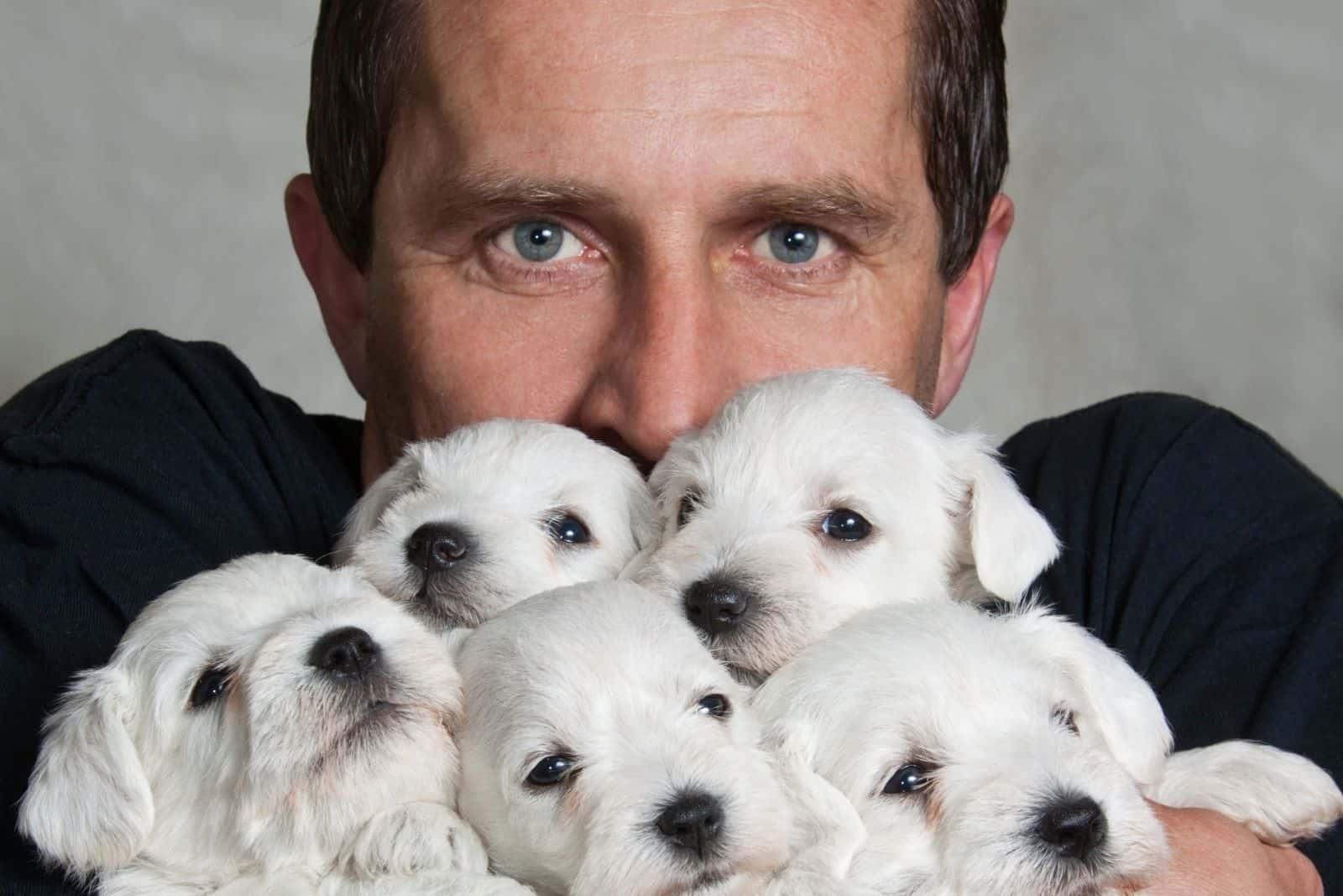 man with five miniature schnauzer puppies