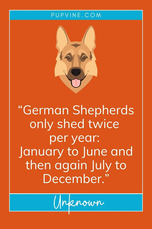 german shepherd quotes
