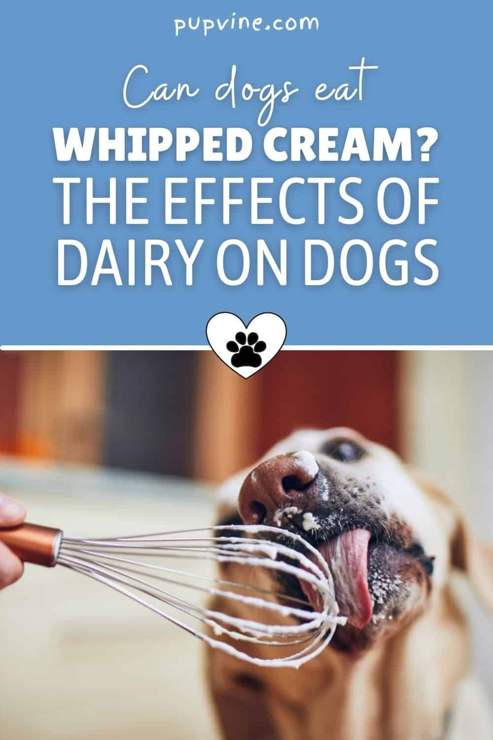 Can Dogs Eat Whipped Cream? The Effects Of Dairy On Dogs