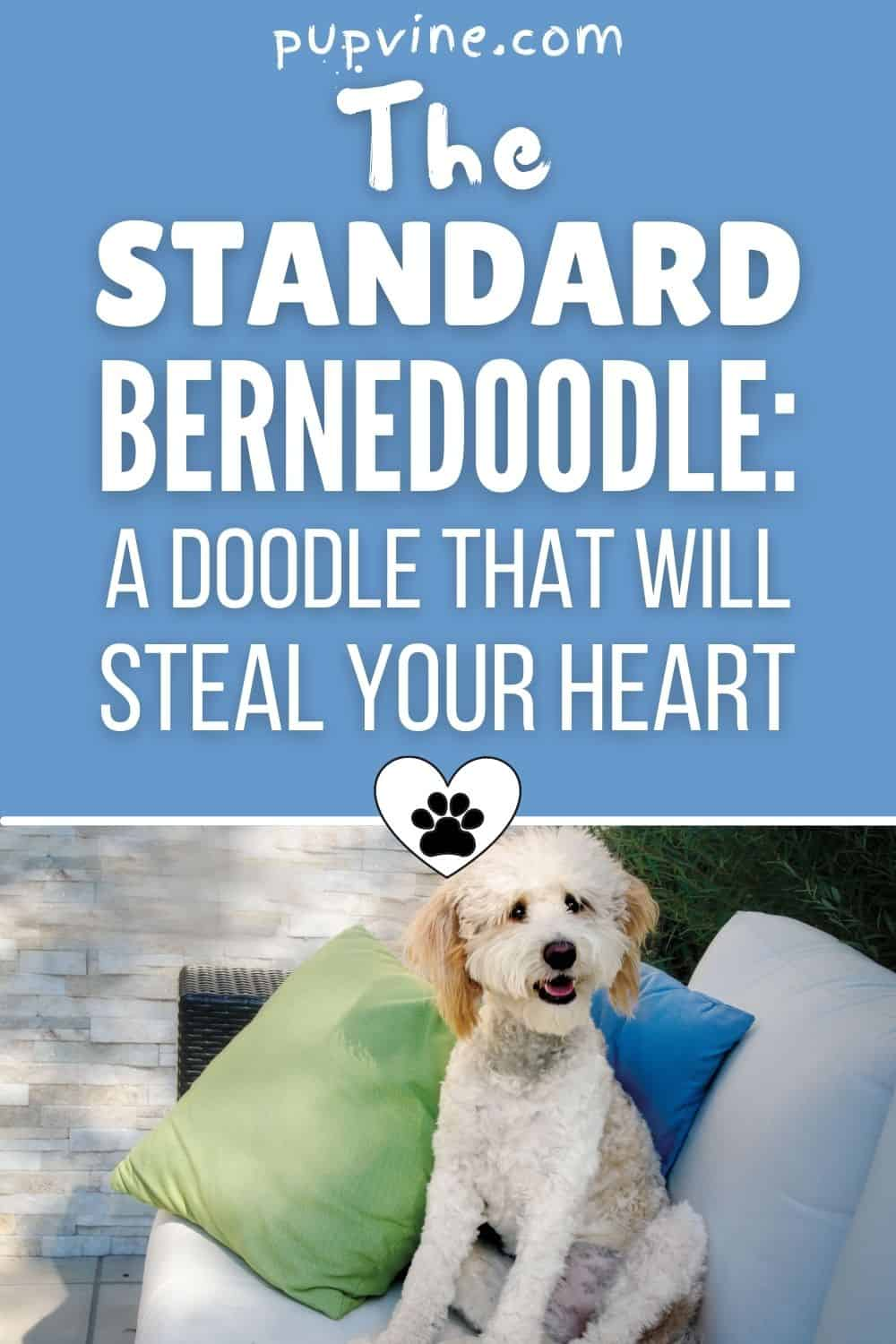 The Standard Bernedoodle: A Doodle That Will Steal Your Heart