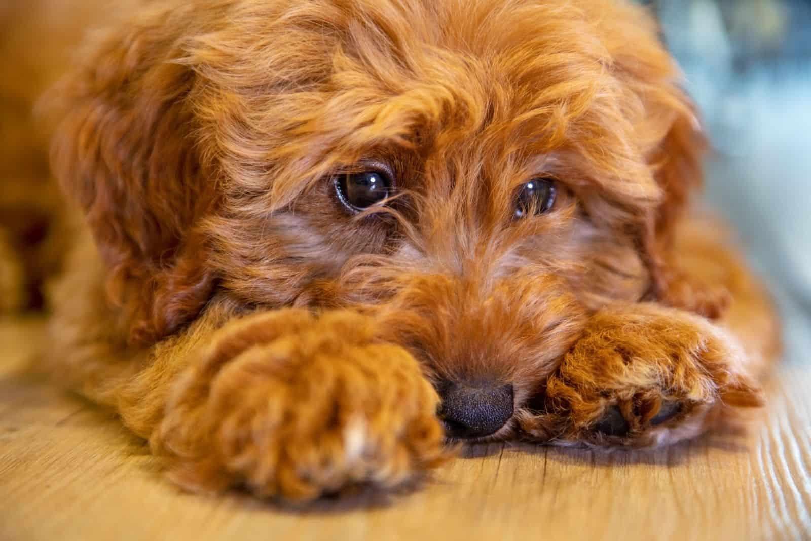 cute puppy dog looking sad