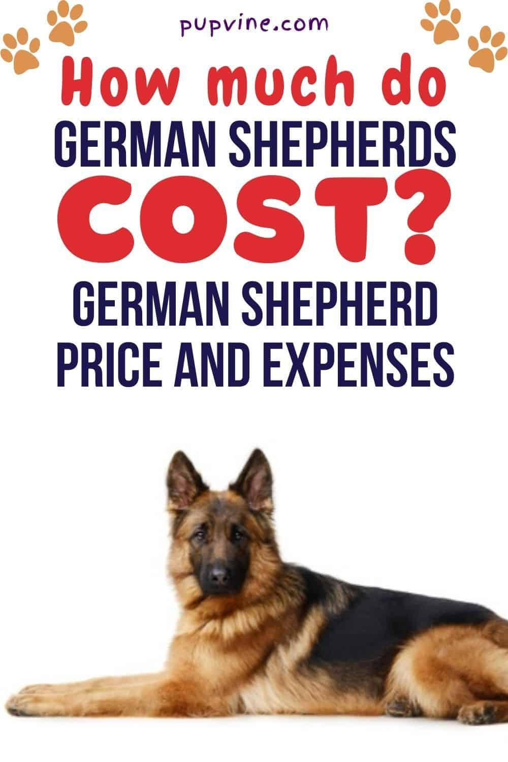 How Much Do German Shepherds Cost? German Shepherd Price And Expenses