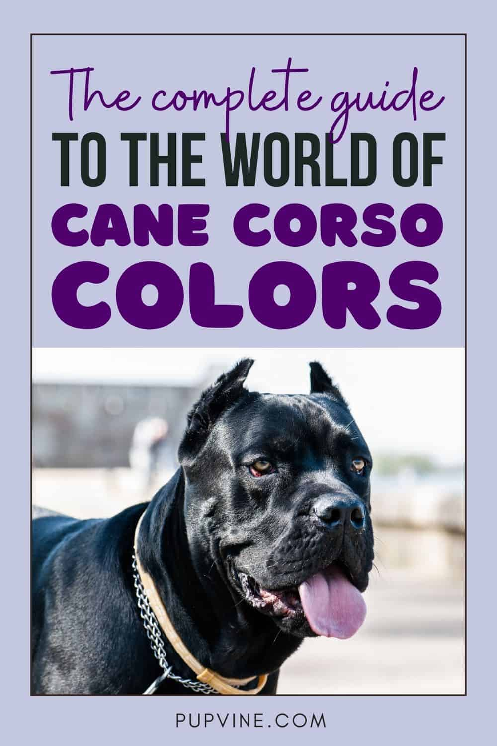 The Complete Guide To The World Of Cane Corso Colors