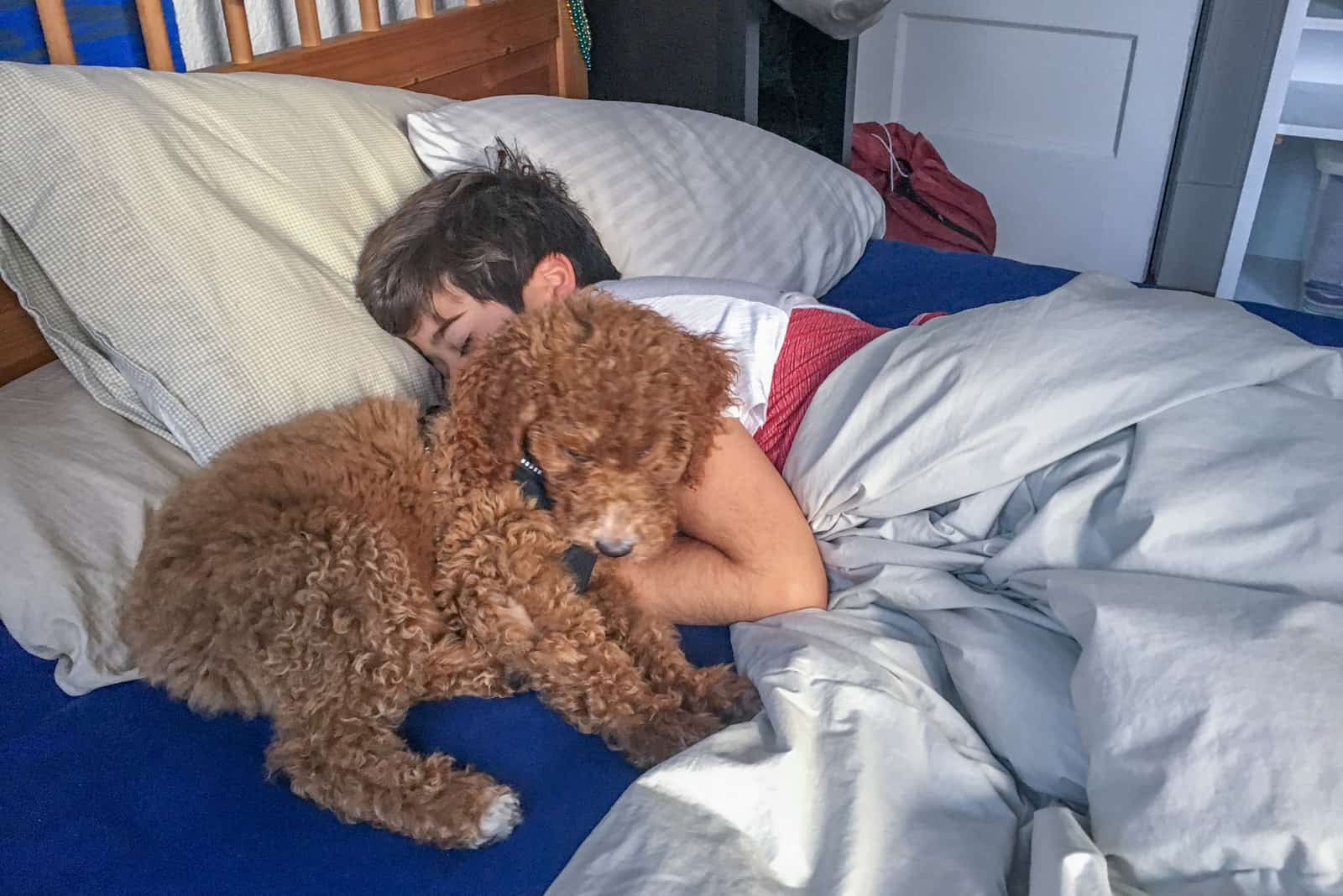 a brown dog and a boy are sleeping on the bed