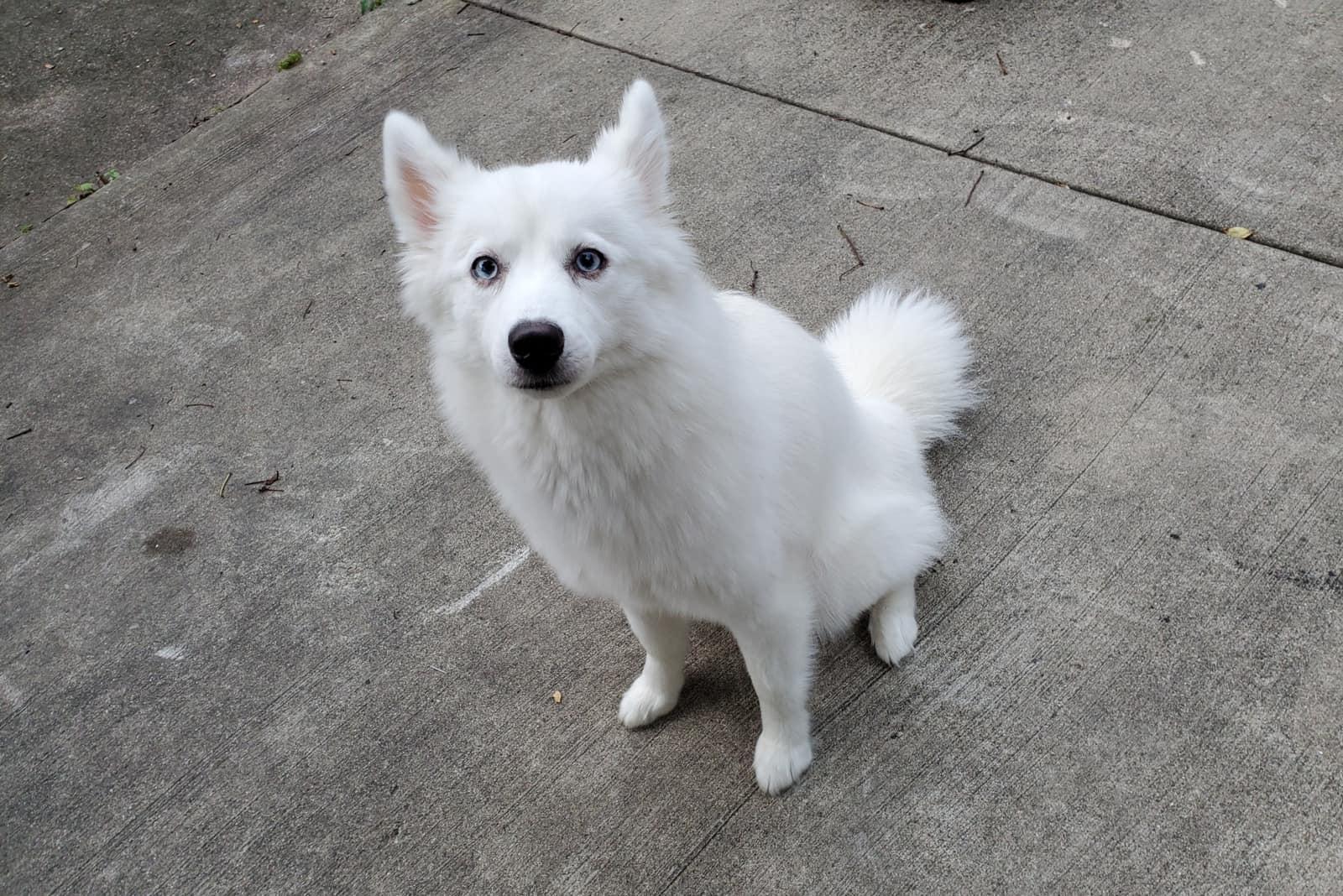 a white hound sitting on a concrete pavement