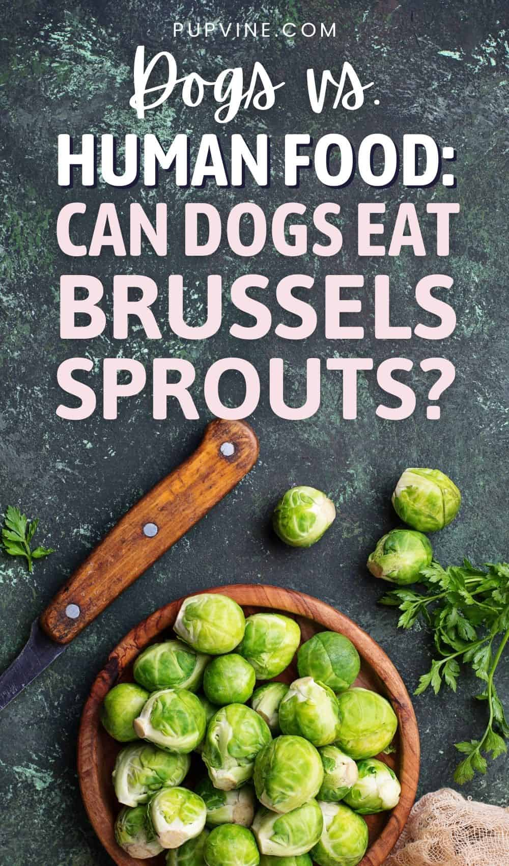 Dogs Vs. Human Food: Can Dogs Eat Brussels Sprouts?