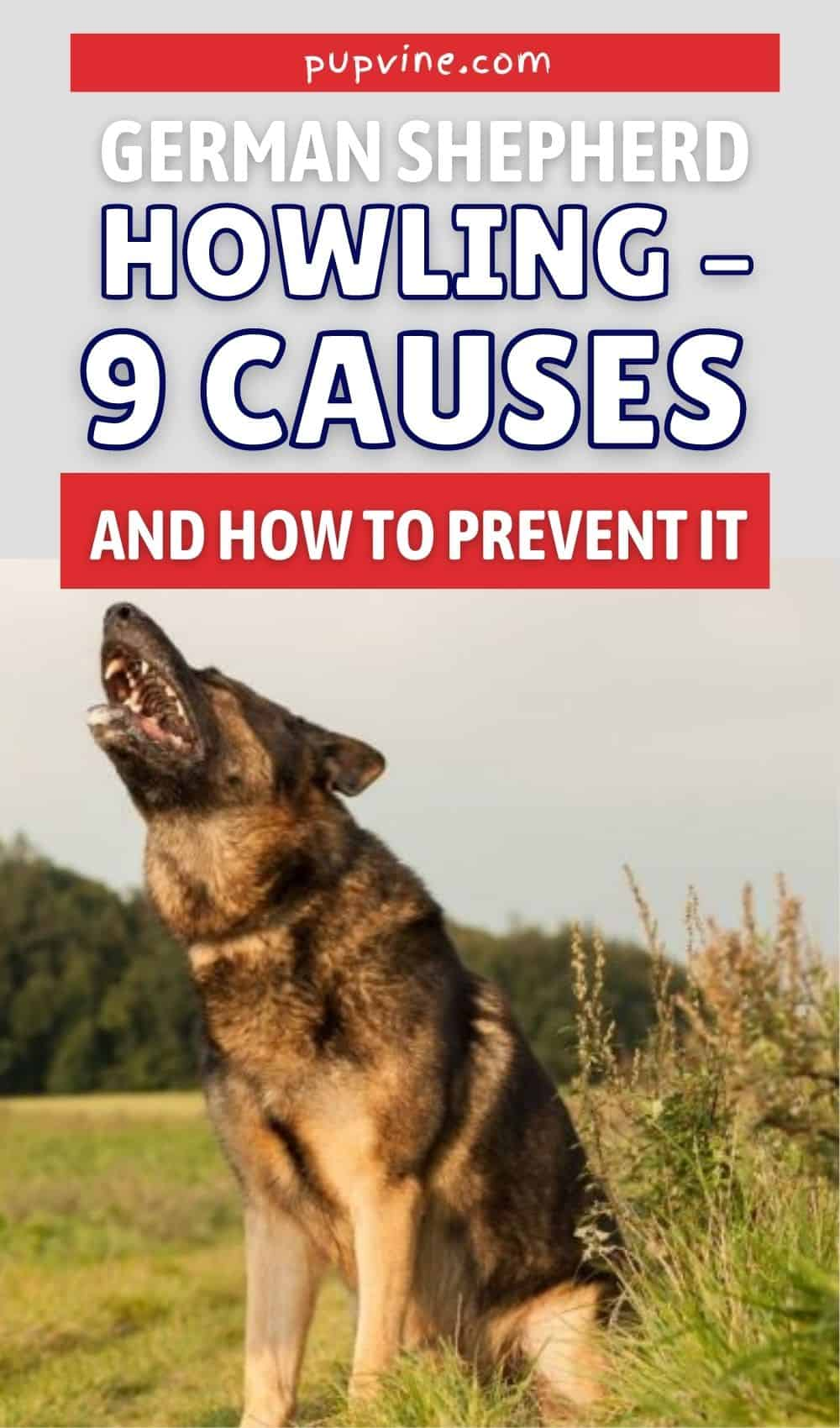 German Shepherd Howling – 9 Causes And How To Prevent It