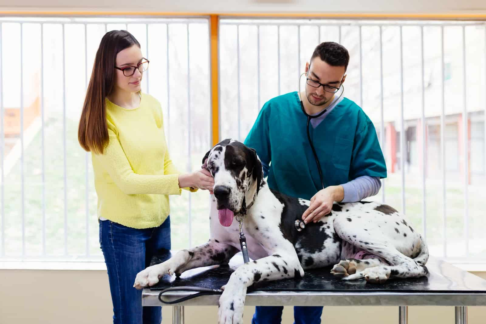 Owner with her Great dane at veterinary