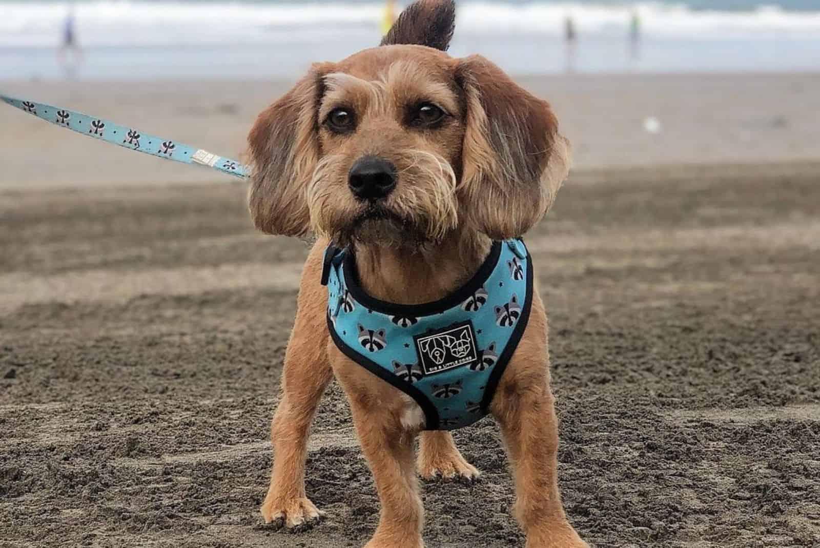 beapoo at the beach