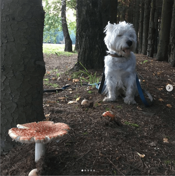 dog beside mushrooms