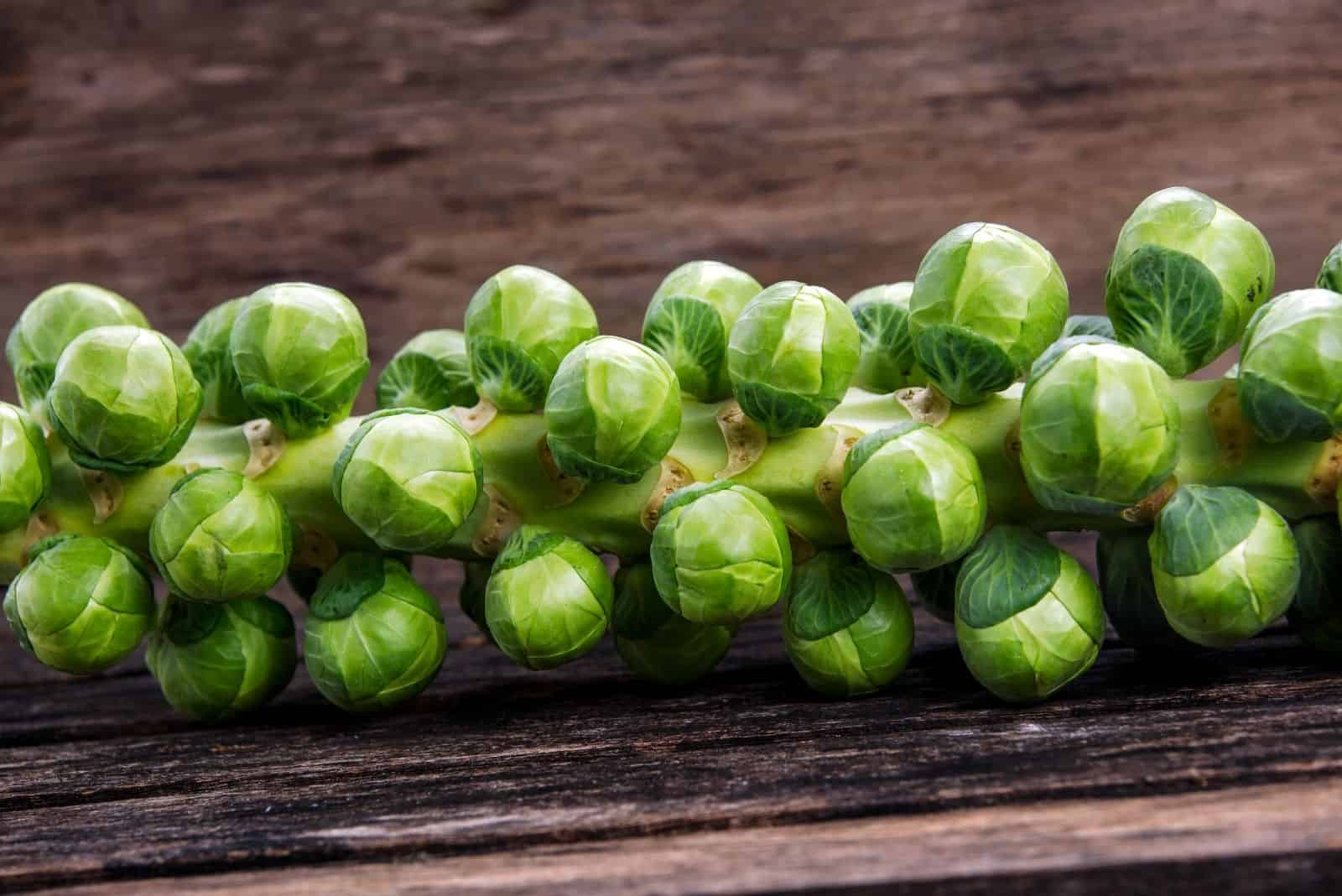 raw brussel sprout on the stalk over the table
