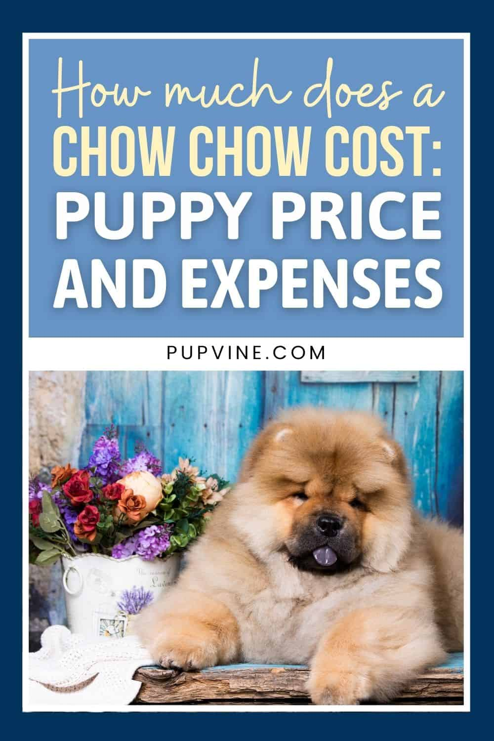 How Much Does A Chow Chow Cost Puppy Price And Expenses