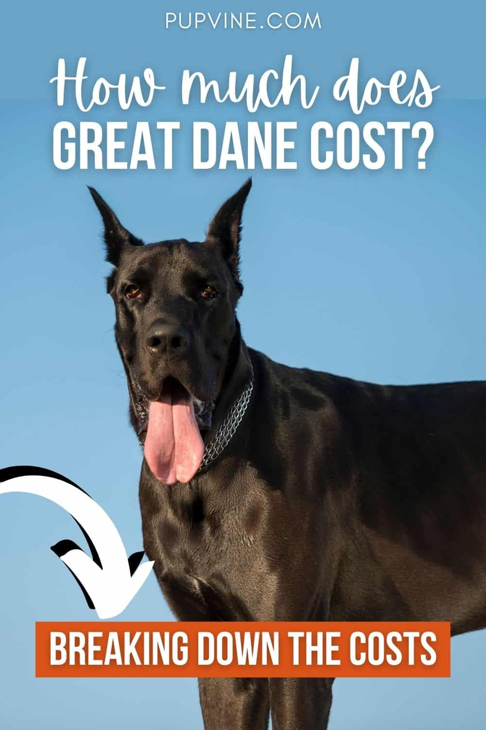 How Much Does Great Dane Cost Breaking Down The Costs