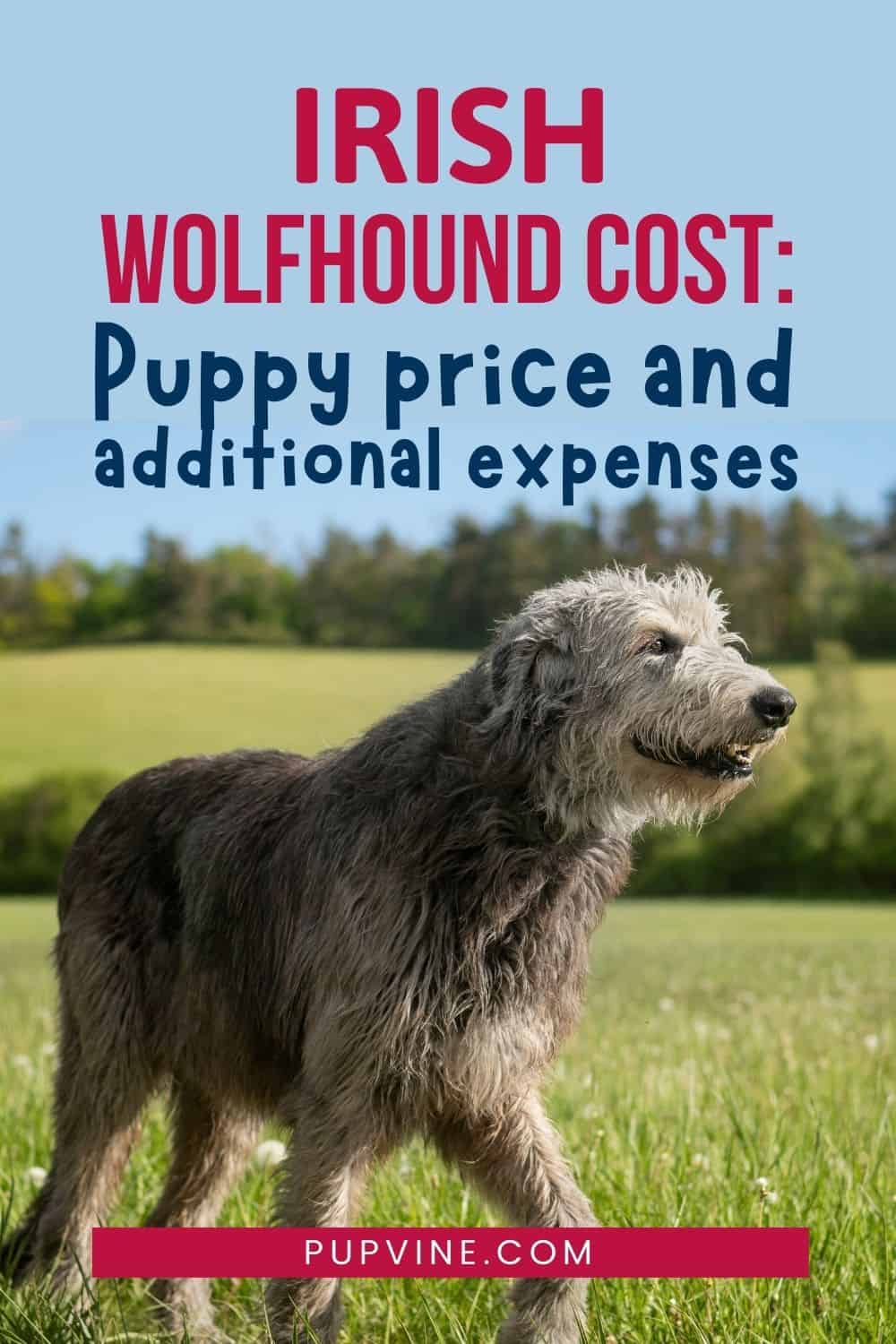 Irish Wolfhound Cost Puppy Price And Additional Expenses