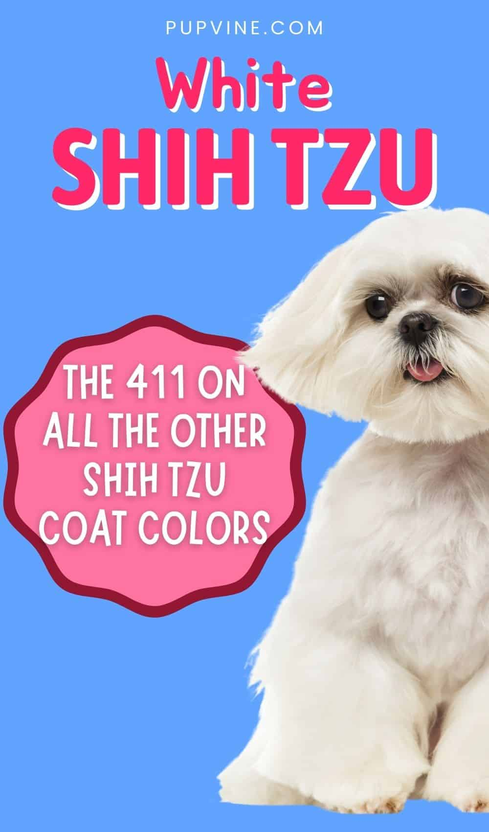 White Shih Tzu And The 411 On All The Other Shih Tzu Coat Colors