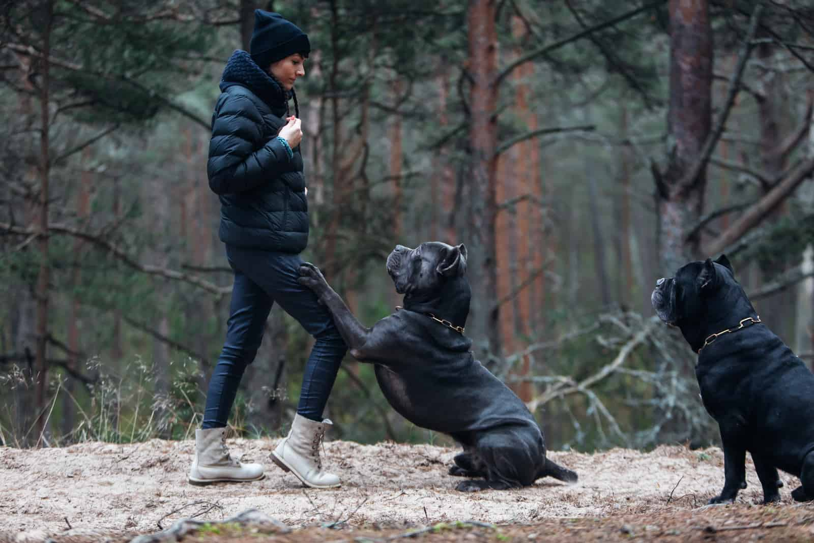 Woman and large, brindle colored cane corso mastiff in the forest