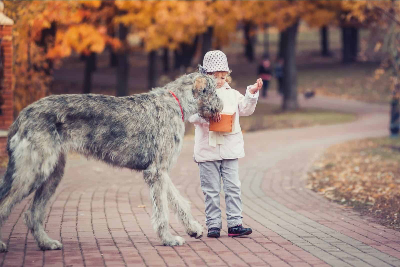 girl giving lollipop to an irish wolfhound in the autumn forest