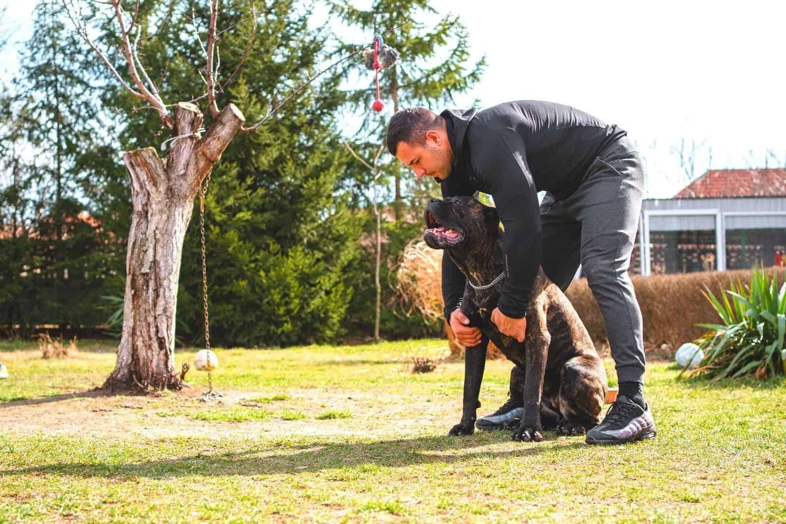 muscular man training his cane corso outdoors
