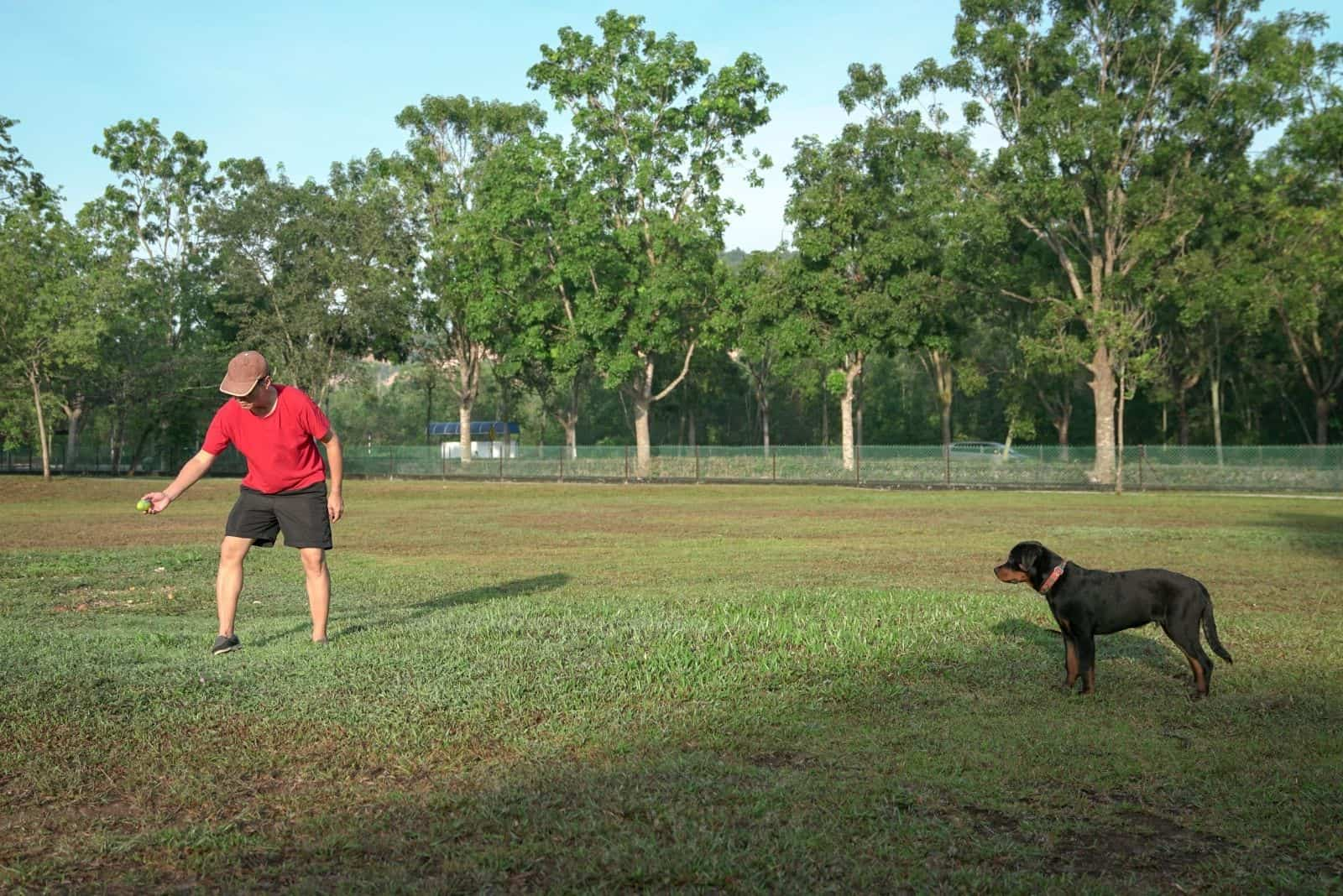 owner teaching dog rottweiler in the field