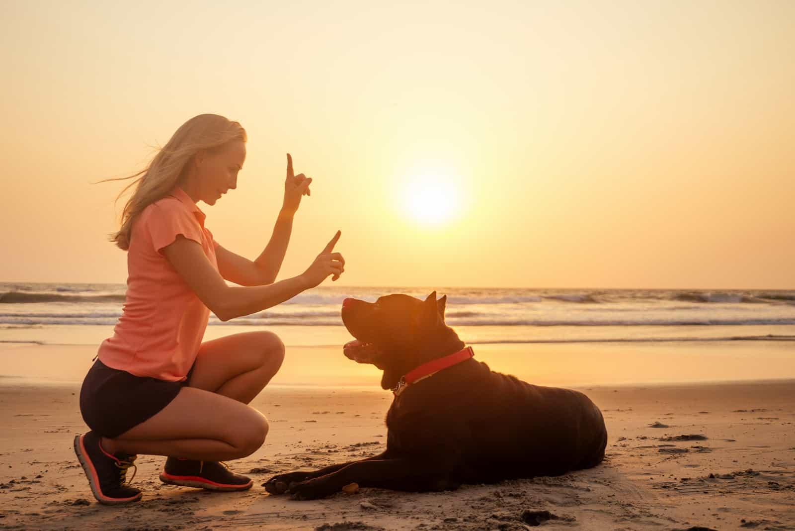 woman training Cane Corso dog at the beach