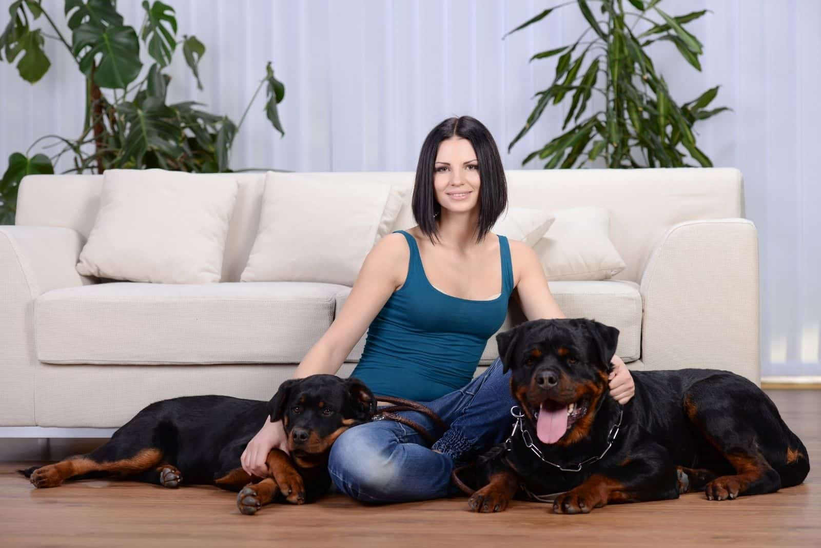 young beautiful woman with her two adorable rottweiler in the livingroom