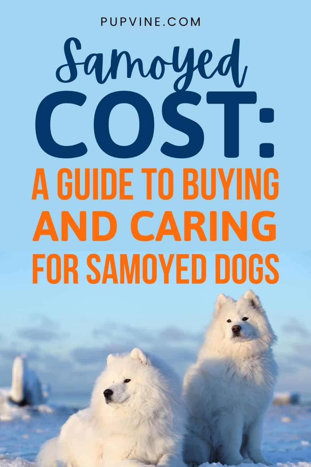 Samoyed Cost A Guide To Buying And Caring For Samoyed Dogs
