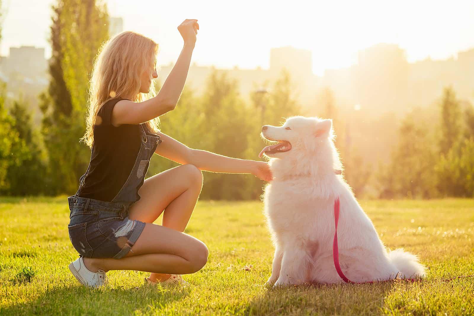 woman training a white fluffy cute samoyed dog