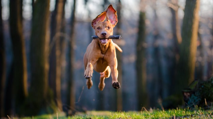 100+ Hunting Dog Names – Best Names For Your Field Companion
