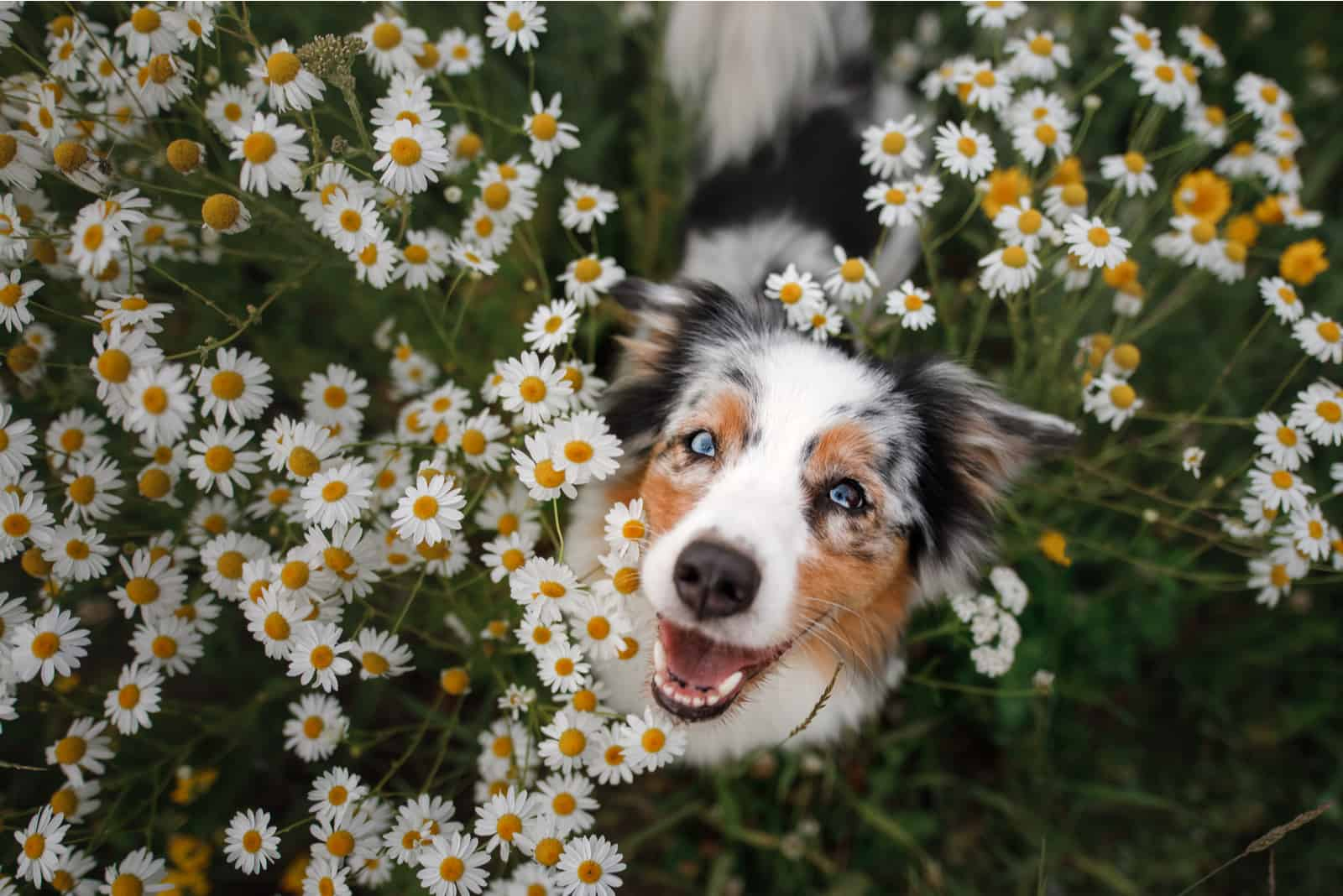 A happy dog in flowers