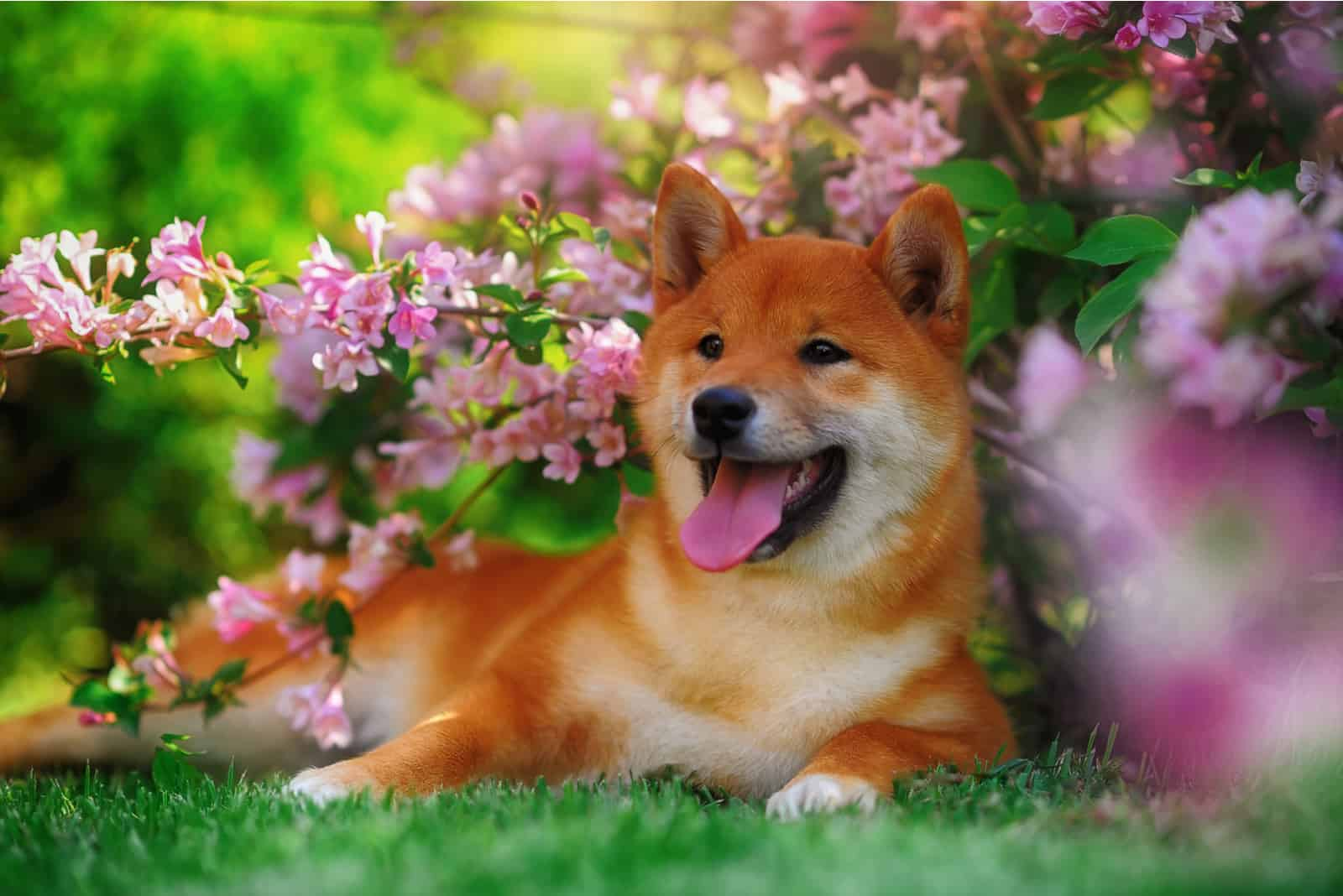 Dog lying in nature