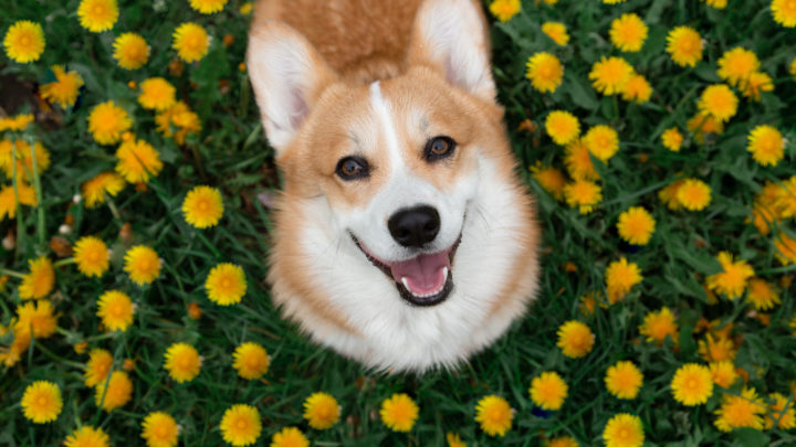 Flower Names For Dogs: A Lovely Bouquet Of Ideas