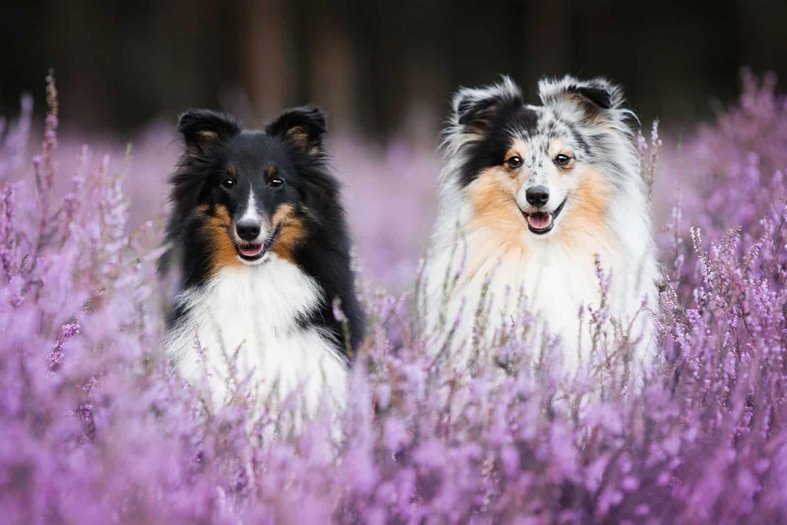 Two cute dogs in flowers