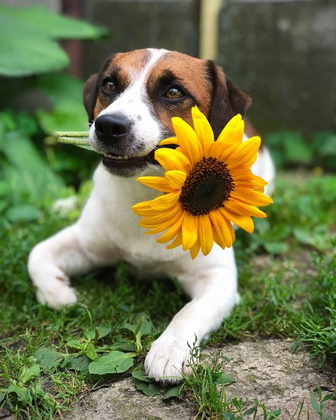 adorable dog lying on the grass holding flower in his mouth
