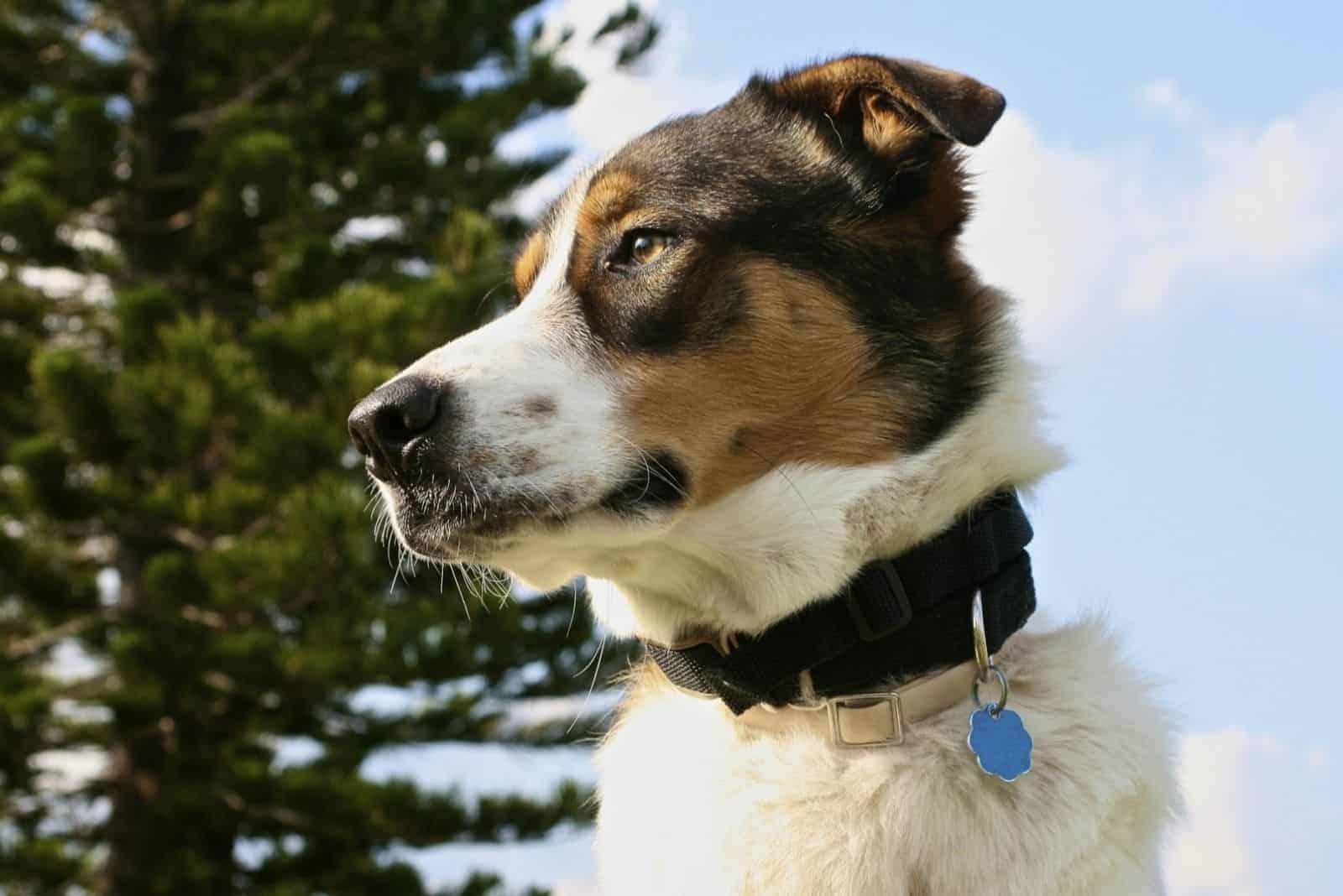 beautiful dog standing outdoor