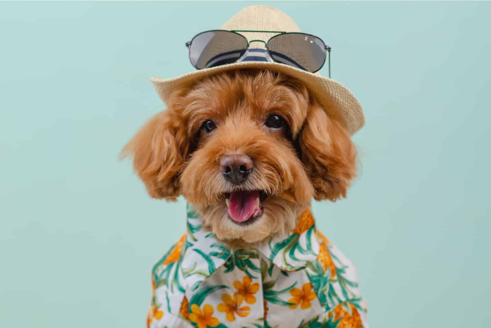 cute dog in a hawaiian shirt