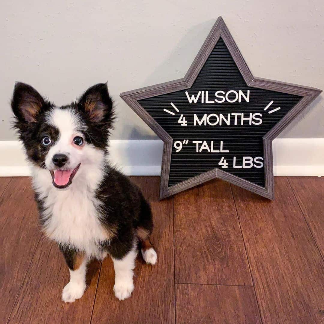 cute dog standing by the sign board